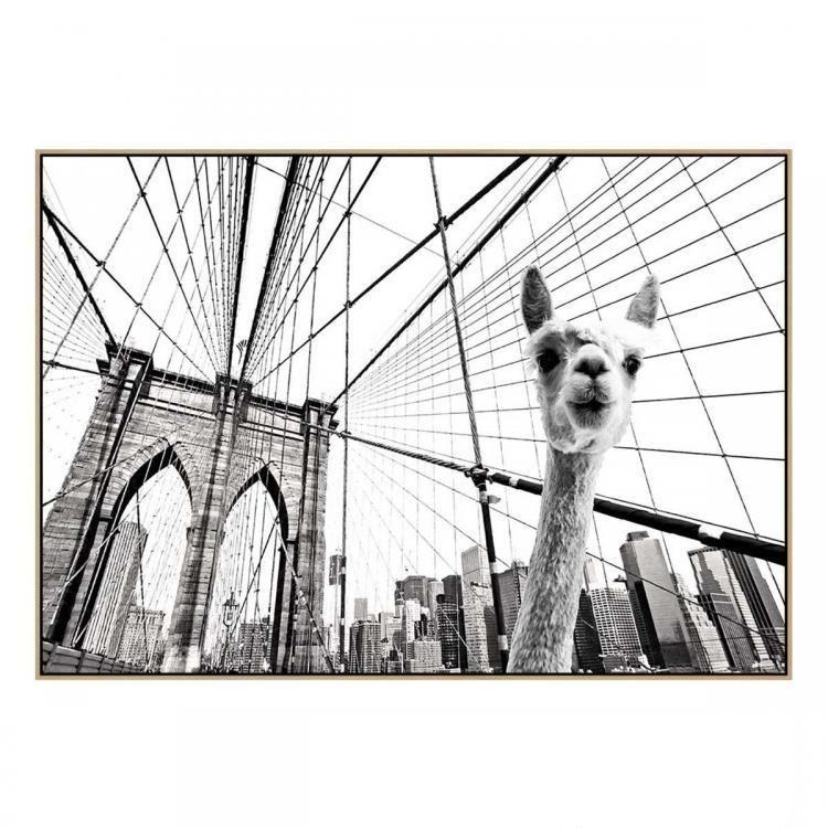 Llama in Brooklyn 2 - Canvas Print - Natural Frame - ONE ONLY