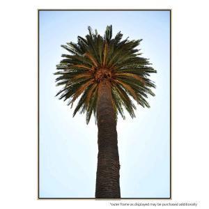 Big Palm Tree - Print