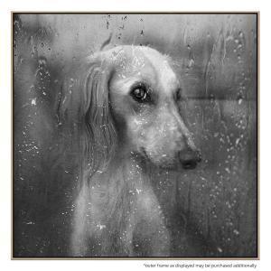 Rain Go Away - Print