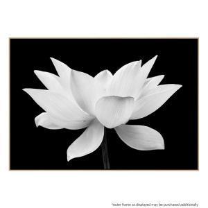 Lotus Me 2 - Print