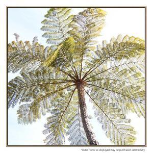 Fern Tree - Print