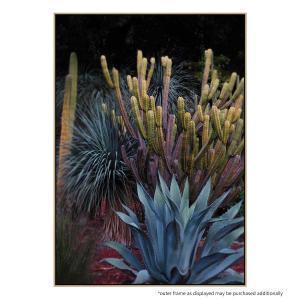 Cactus Magic - Print
