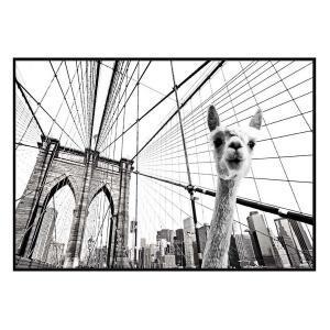 Llama in Brooklyn 2 - Canvas Print - Black Frame - ONE ONLY