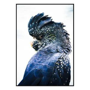 Cockatoo Blue - Canvas Print - Black Frame - ONE ONLY