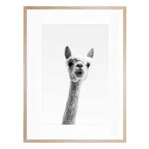 Llama In Brooklyn 1 - Framed Print - Natural Frame - ONE ONLY