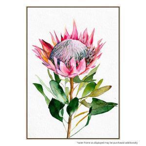 Protea  (CL) - Print