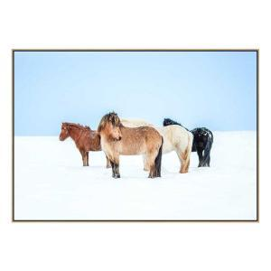 Horses In Color - Canvas Print - Natural Frame - ONE ONLY