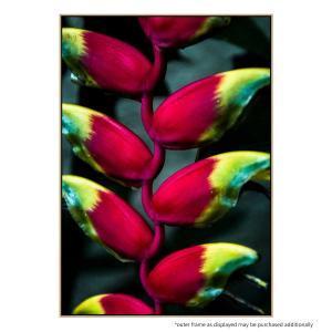 Banana Flower - Print