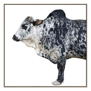 Bull Front - Canvas Print - Natural Shadow Frame (Clearanc