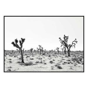 Palm Springs Story - Canvas Print - Black Shadow Frame (Cleara