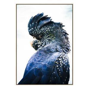 Cockatoo Blue - Print - Natural Shadow Frame (Warehouse Sale)
