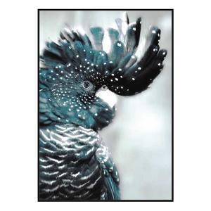 Cockatoo Teal - Print - Black Floating Frame (Showroom Cle co