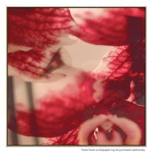 Orchidea - Print