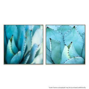 Agave Centrale - Agave - Print